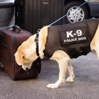 How K-9 Units Affect Criminal Drug Charges