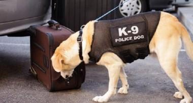 How K-9 Units Affect Criminal Drug Charges